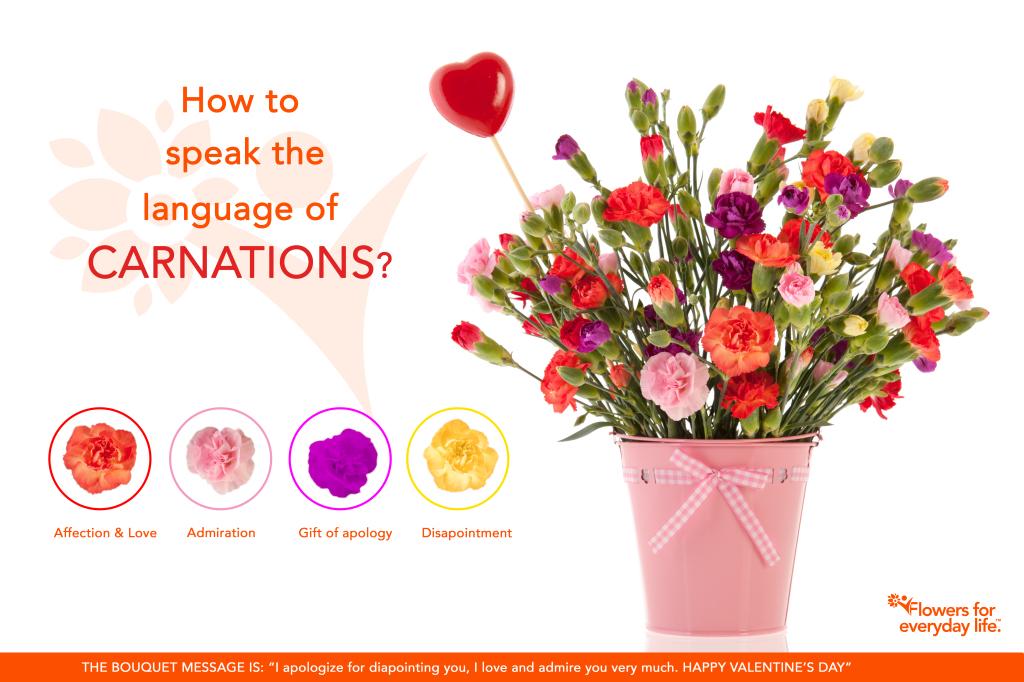 Bouquet colorful Dianthus